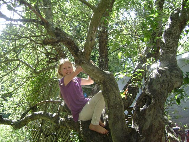 44-Shyamamohini climbs the tree