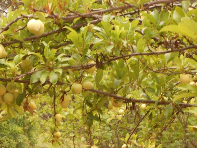 orchard-nourishment-party-44