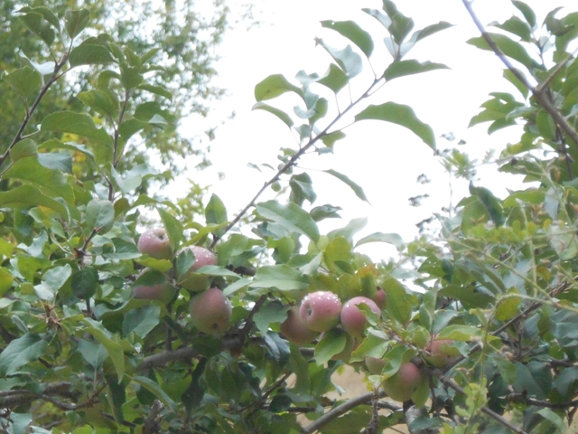 orchard-nourishment-party-48