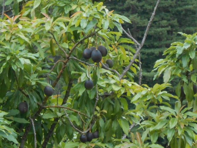 orchard-nourishment-party-49