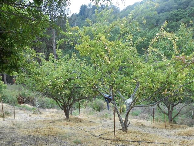 orchard-nourishment-party-53