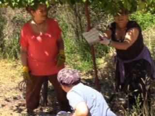orchard-nourishment-party-15