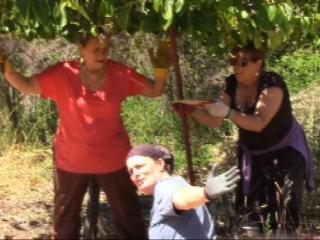 orchard-nourishment-party-16