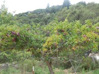 orchard-nourishment-party-54