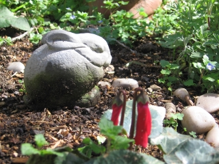 03-Sushila-ashram-garden