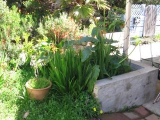 06-Sushila-ashram-garden