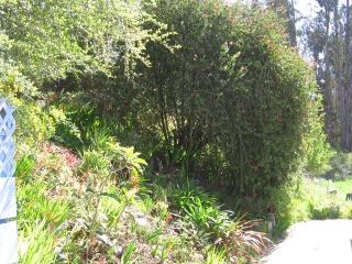 10-Sushila-ashram-garden