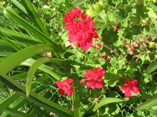 11-Sushila-ashram-garden