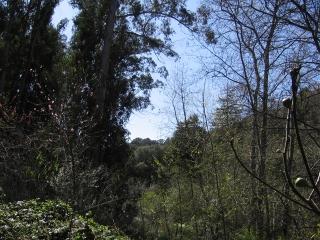 28-Sushila-ashram-garden